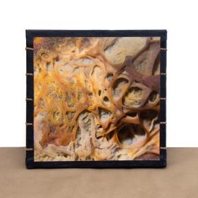 Mold Pop-Up Book